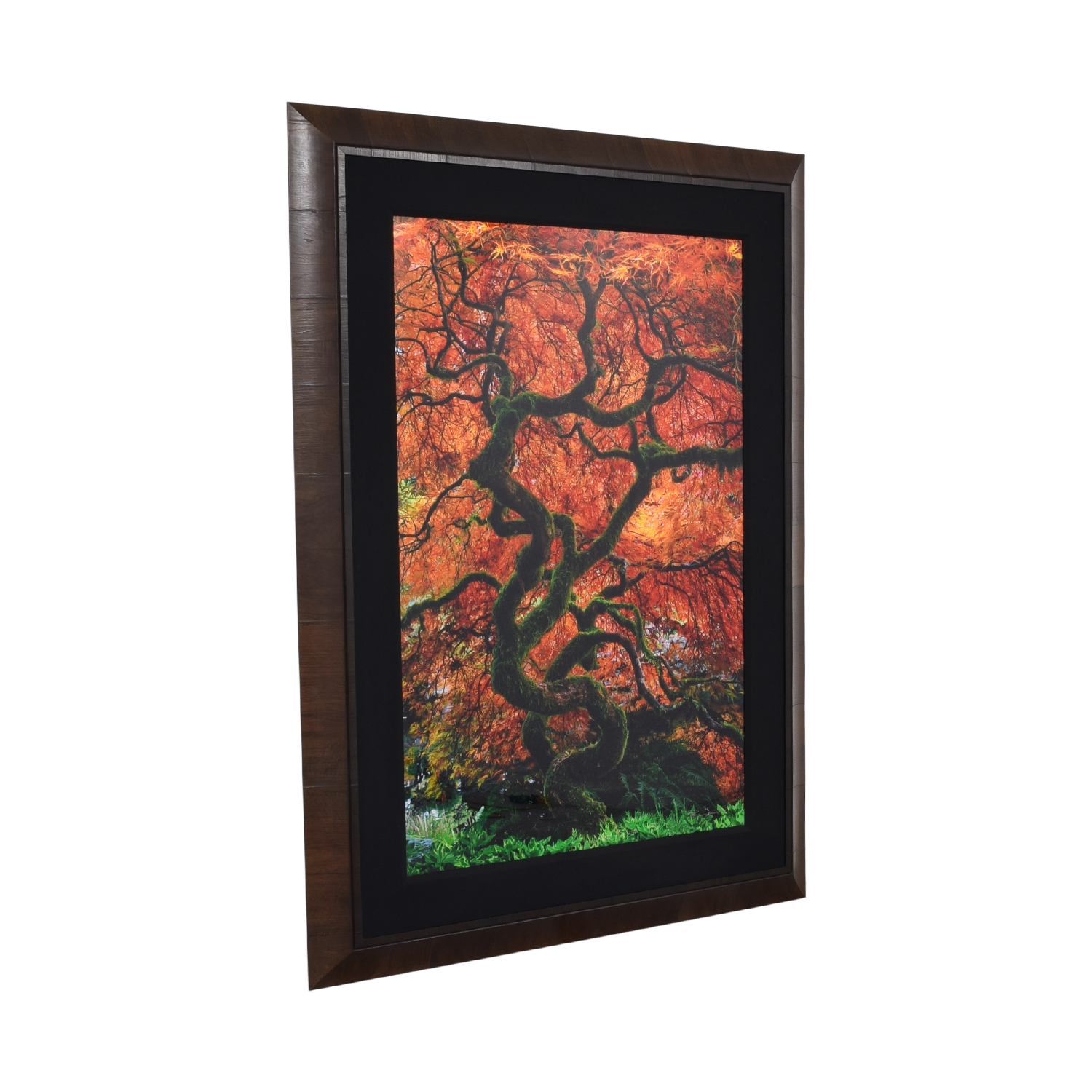 buy  Peter Lik Infinity Tree Framed Wall Art online