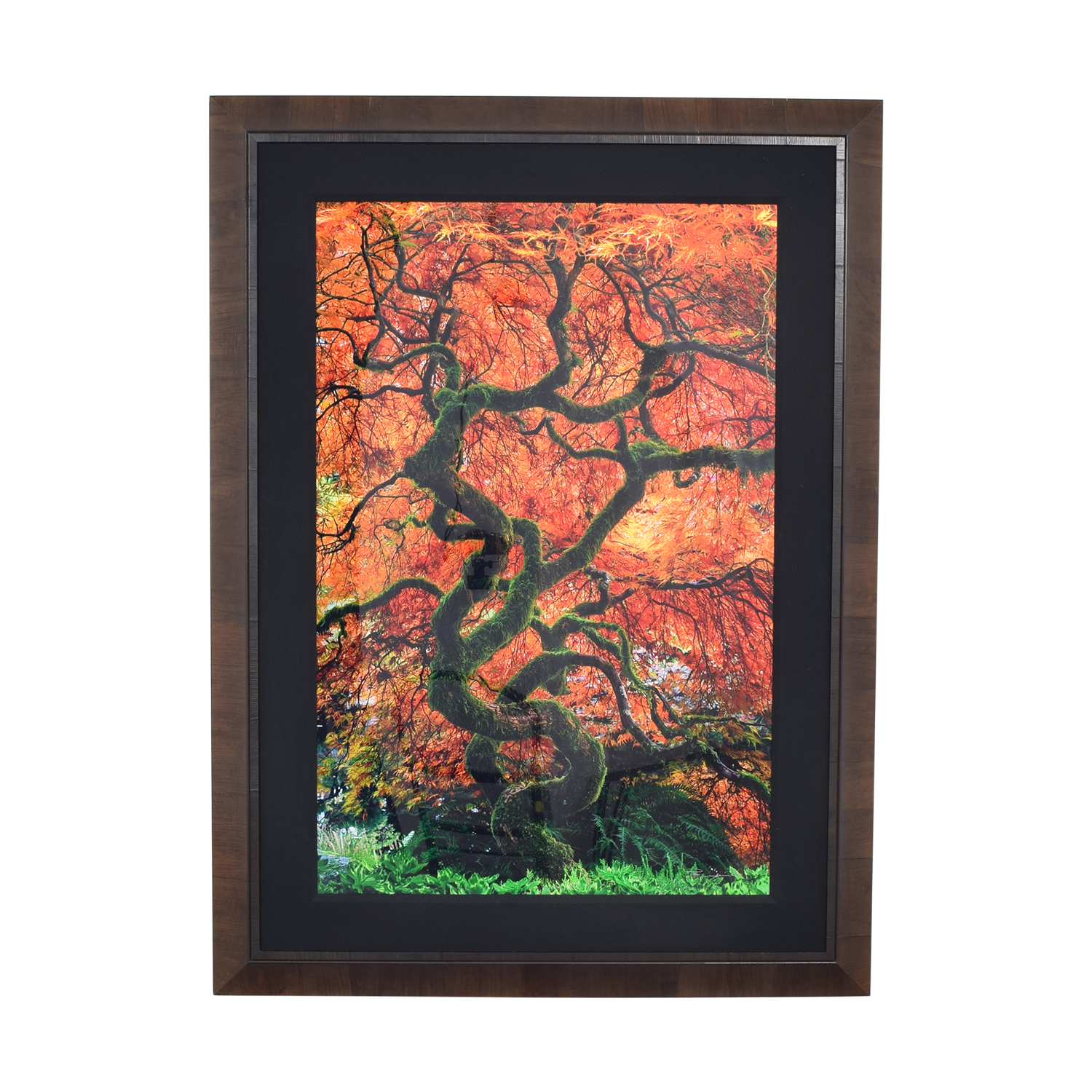Peter Lik Infinity Tree Framed Wall Art