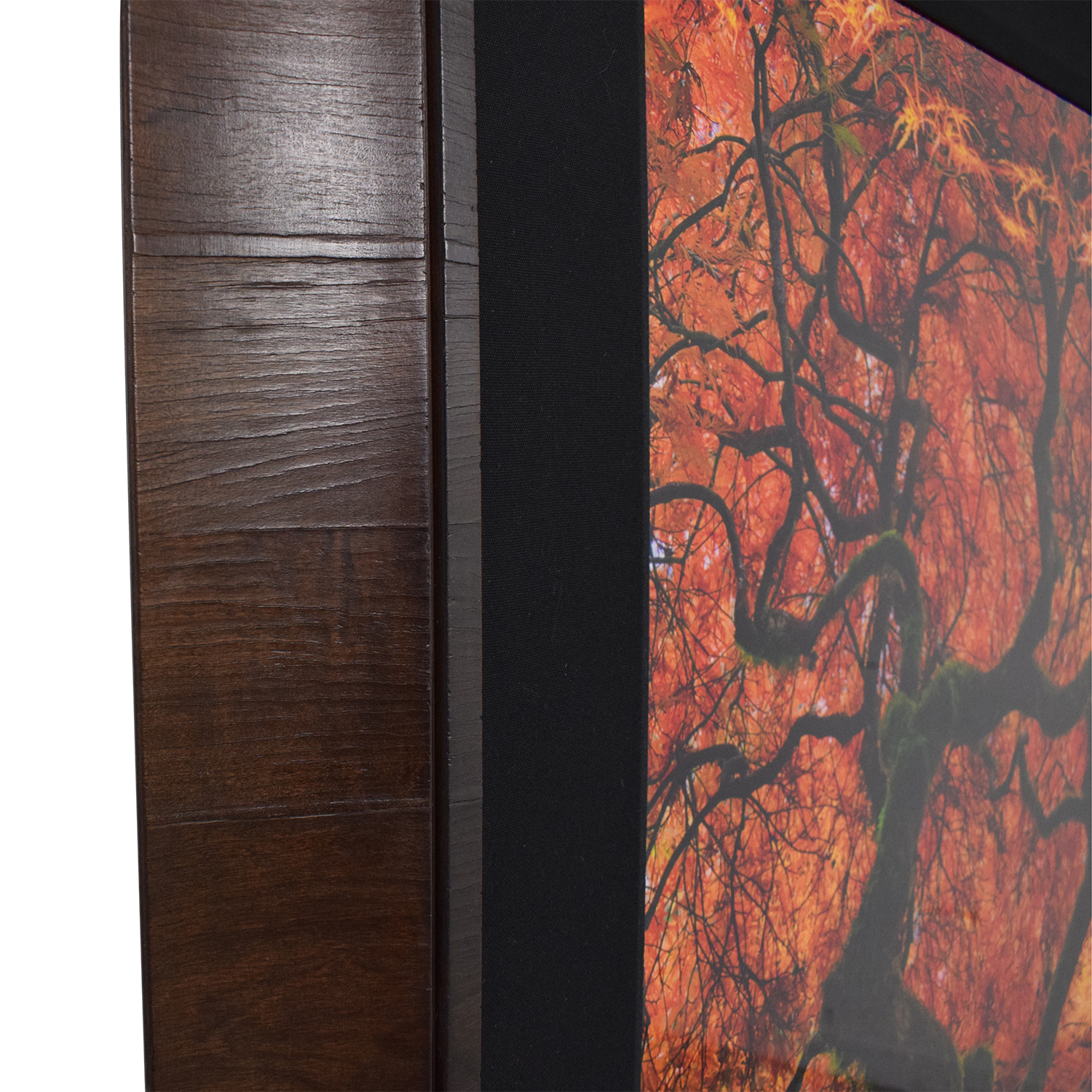 Peter Lik Infinity Tree Framed Wall Art nj