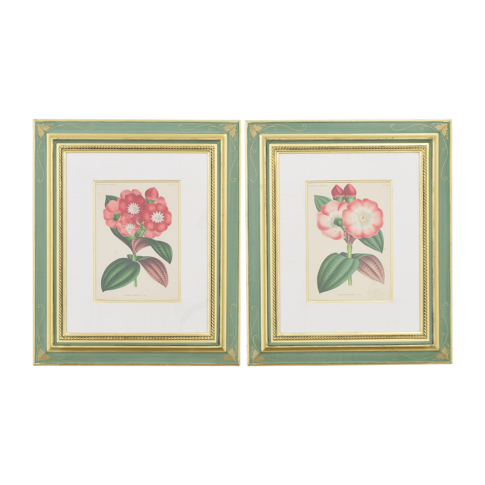 Botanical Wall Art for sale