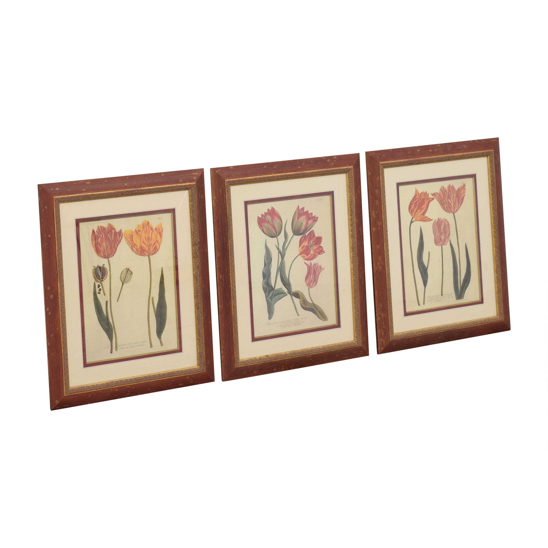 Three Tulip Prints discount