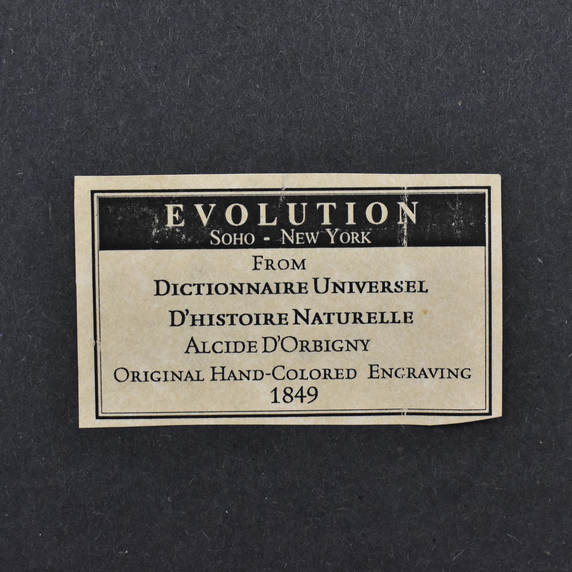 shop  Evolution Wall Art online