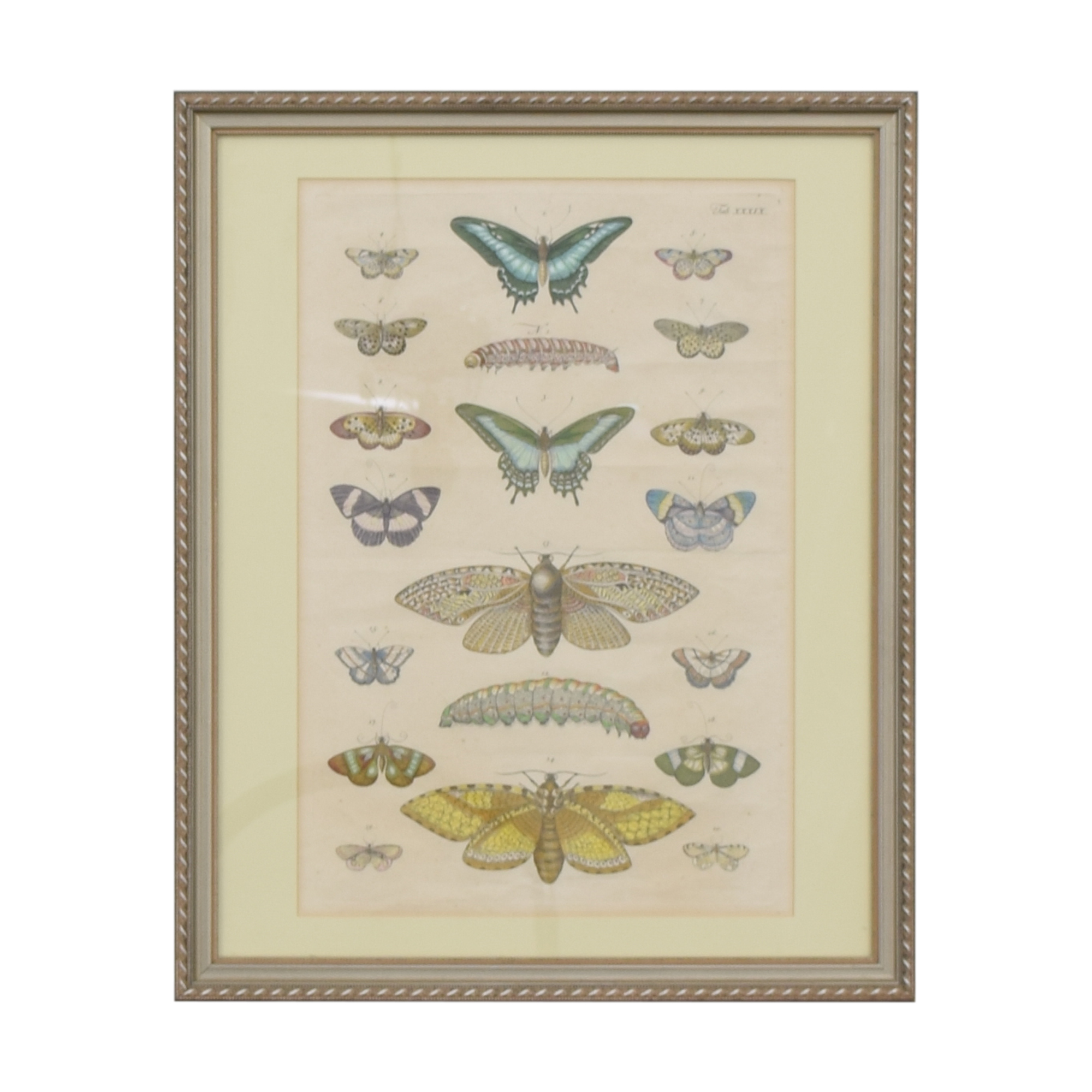 Butterfly Wall Art ct