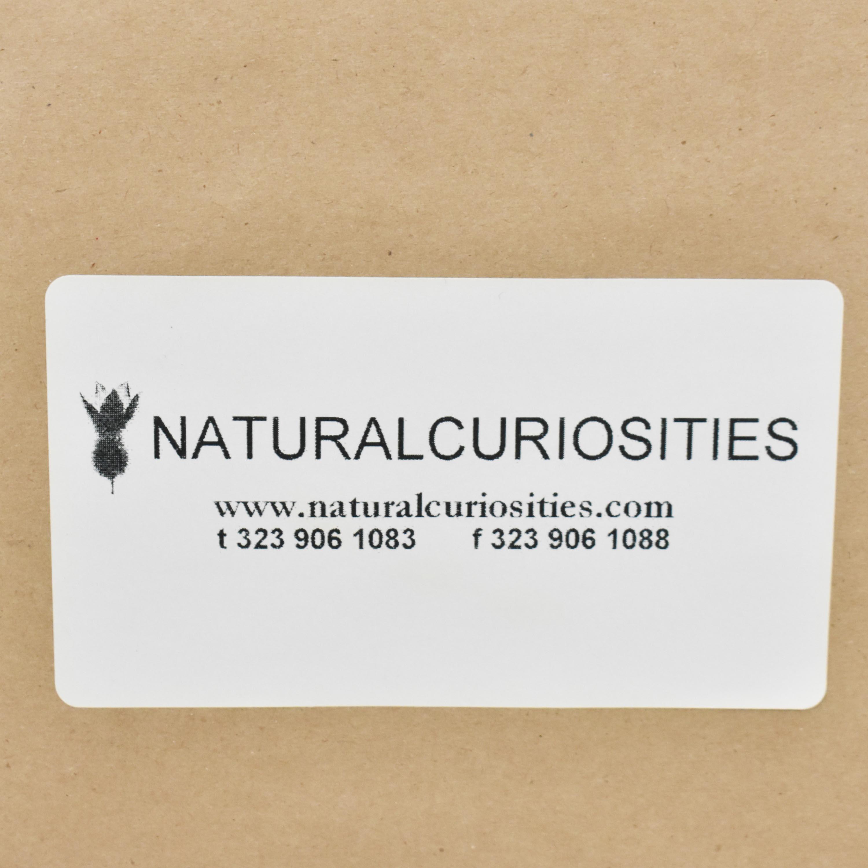 buy Natural Curiosities Framed Wall Art Natural Curiosities Wall Art