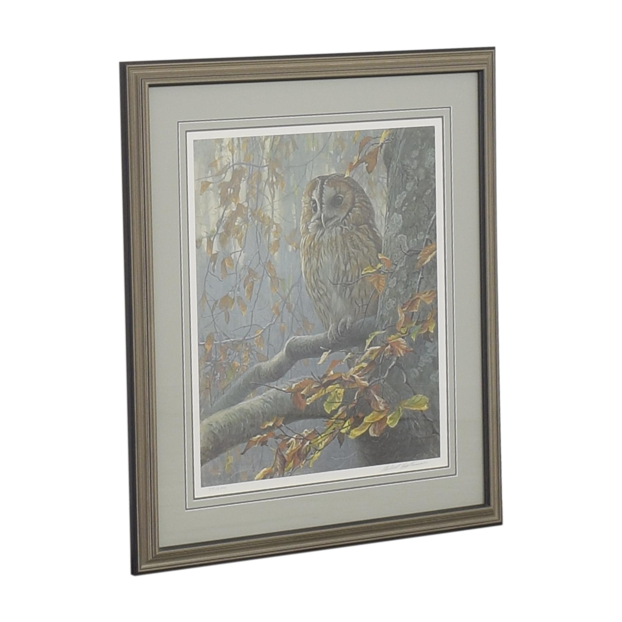 Tawny Owl In Beech Art Print / Wall Art