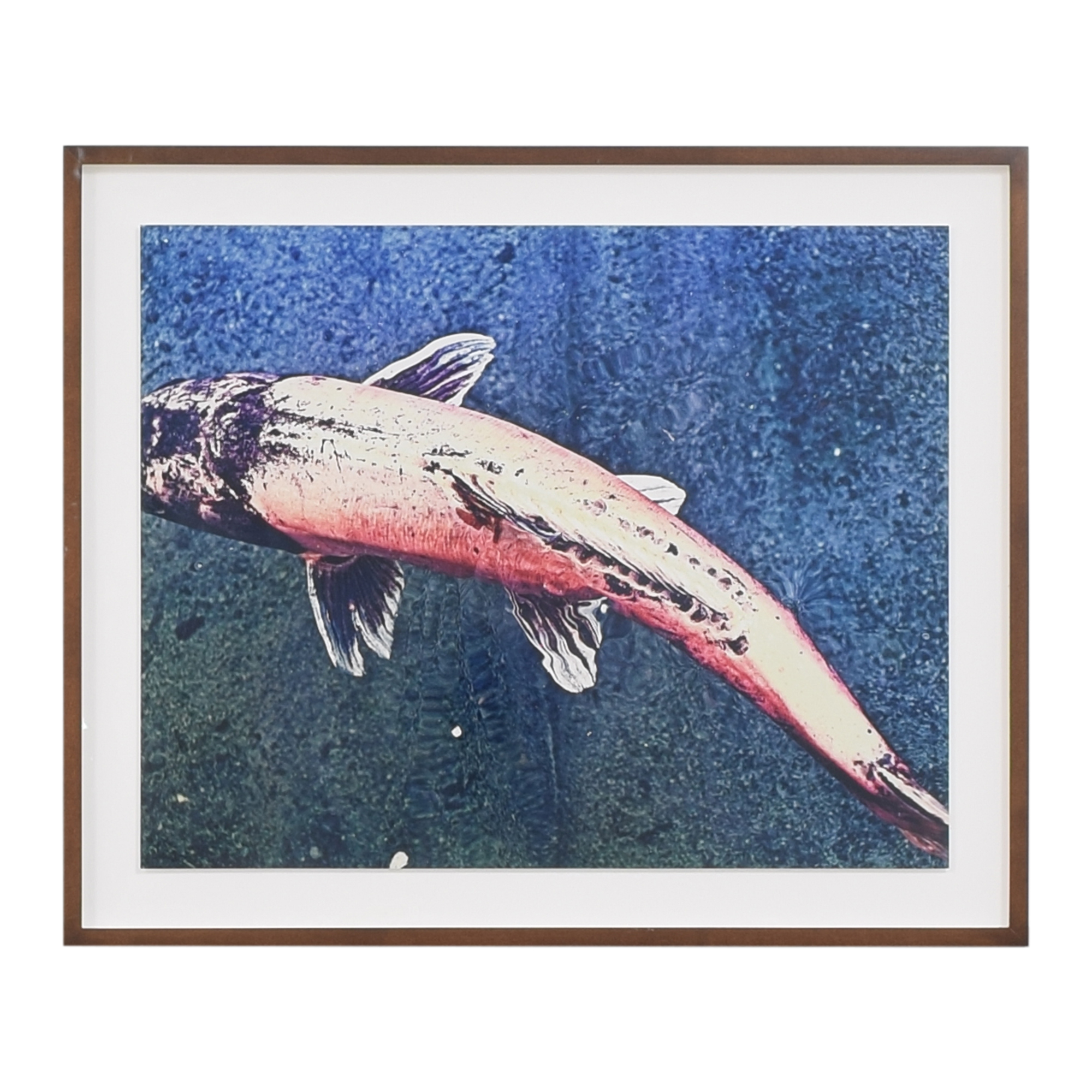 shop Koi Fish Framed Wall Art  Wall Art