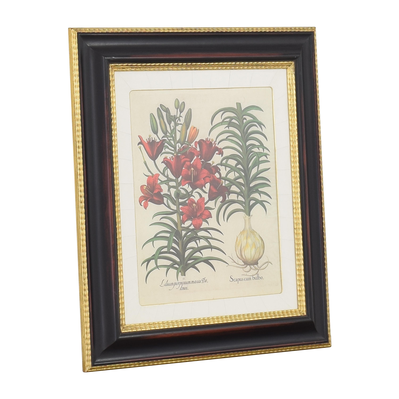 Vintage Framed Botanical Print / Decor