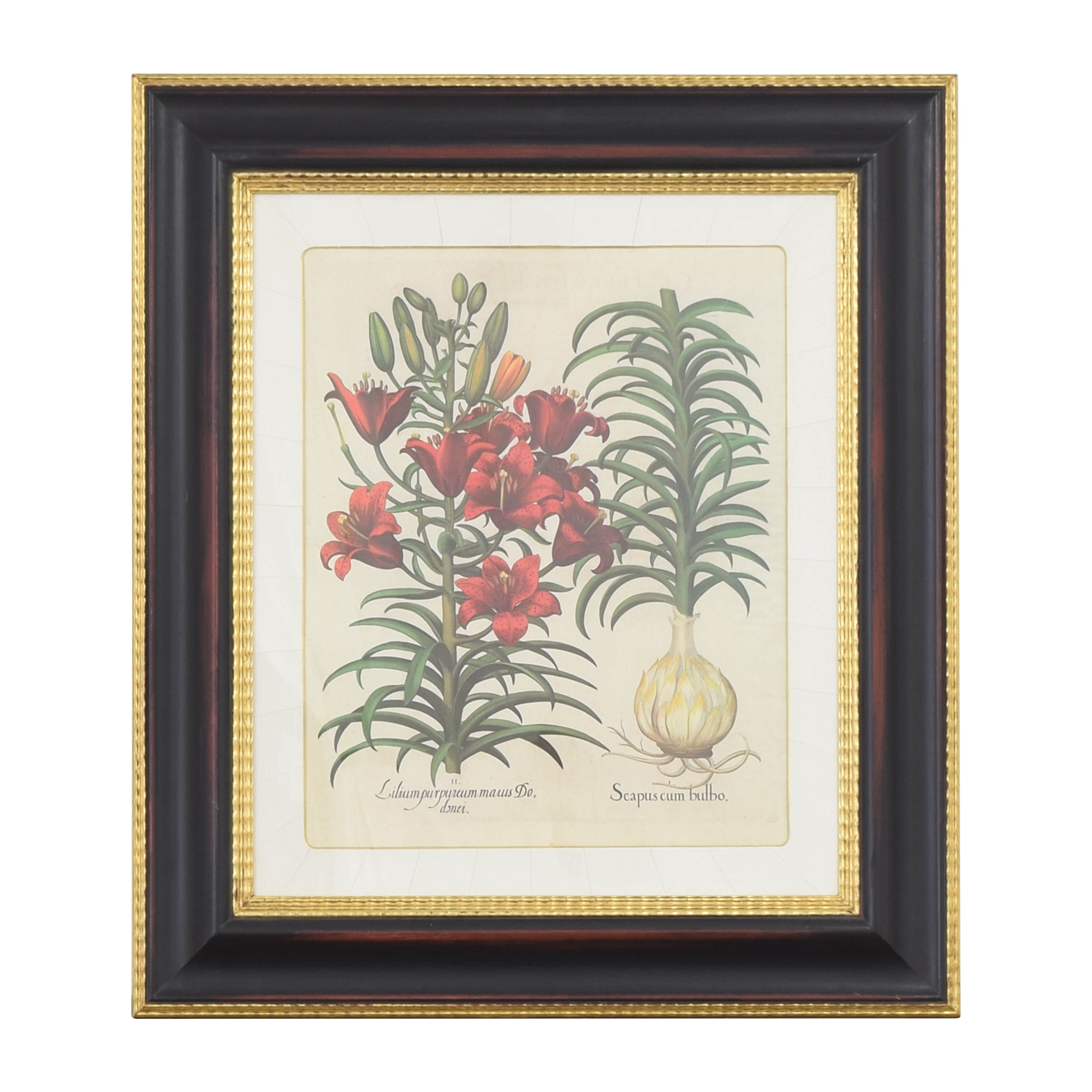 buy Vintage Framed Botanical Print  Decor