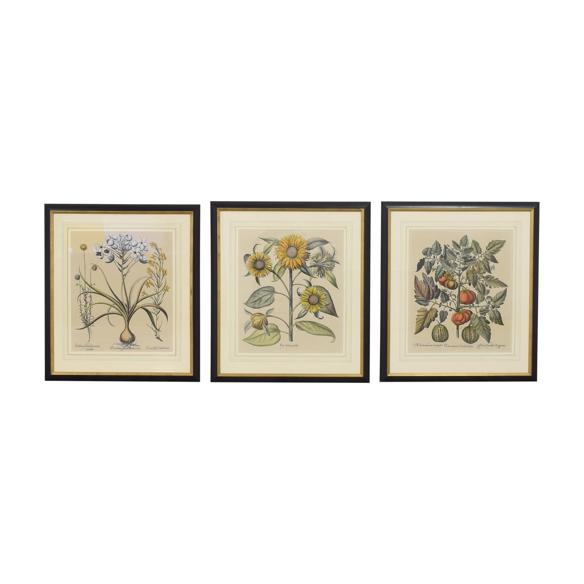 Basilus Besler Botanical Prints