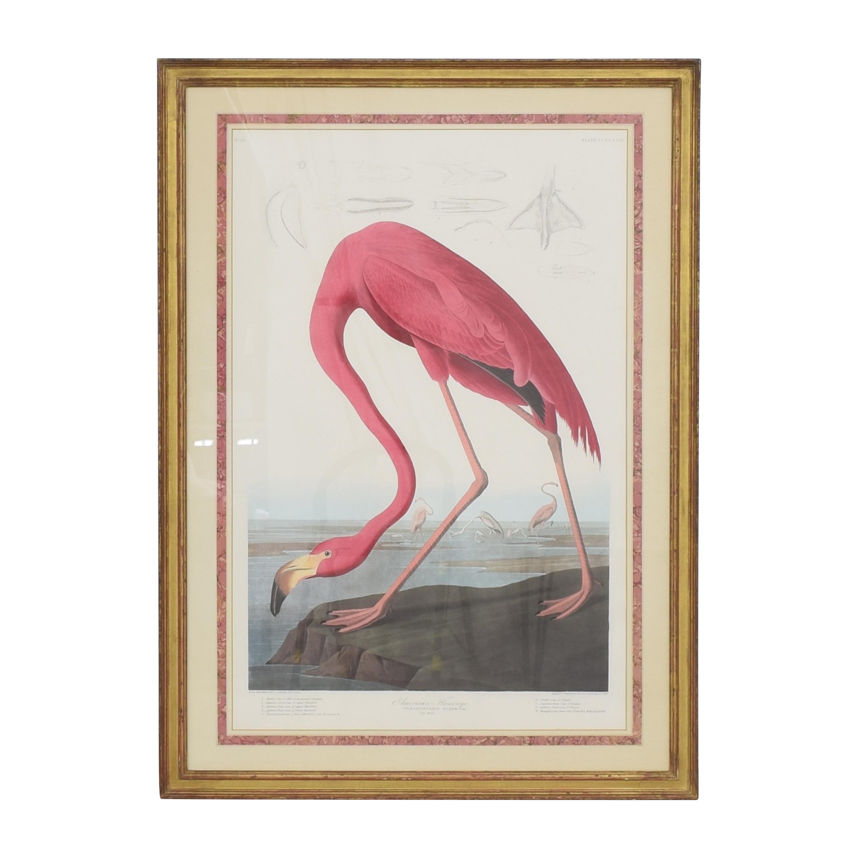 shop Framed Audubon Print  Wall Art