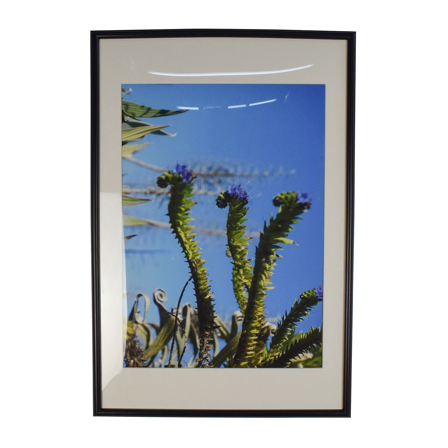 Cactus Picture Frame on sale