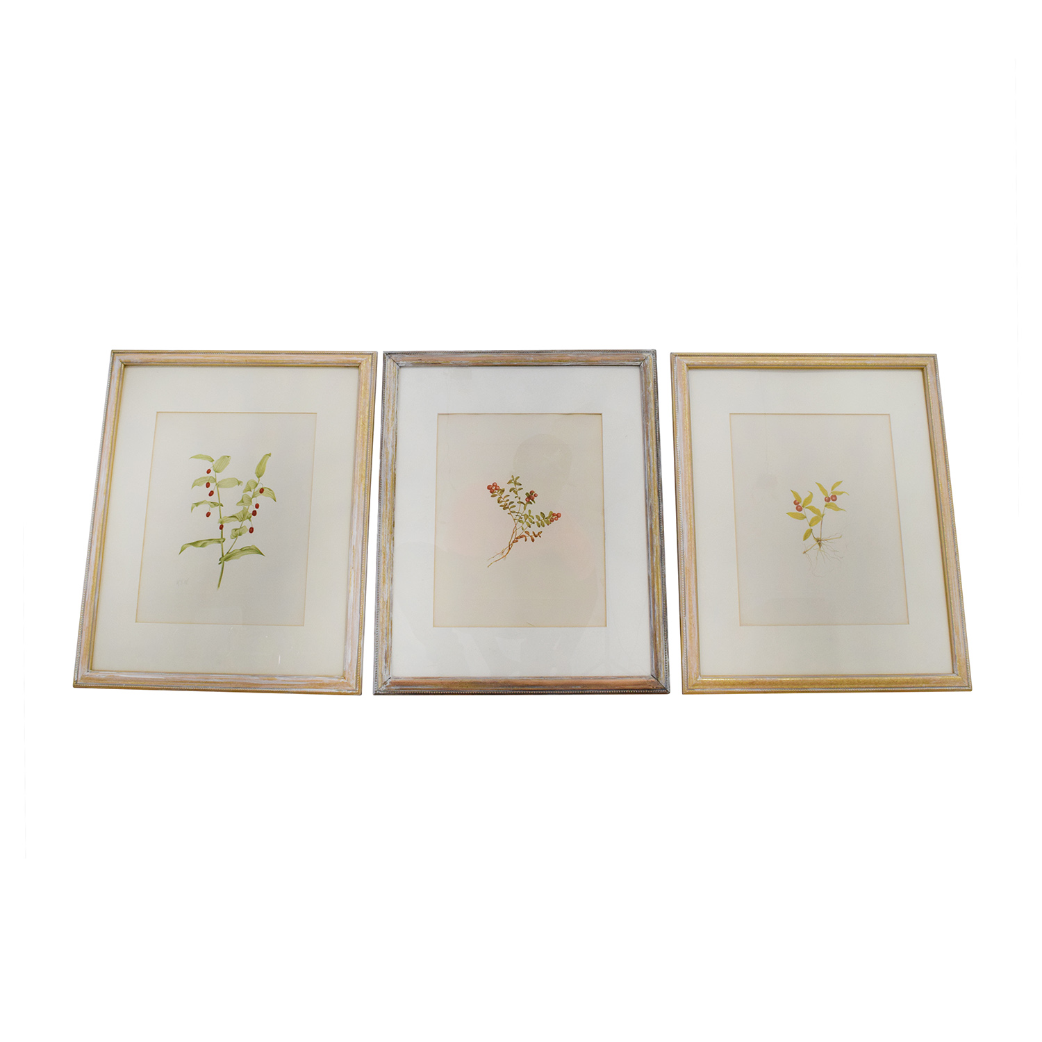 Three Antique Gold Framed Botanical Prints Wall Art