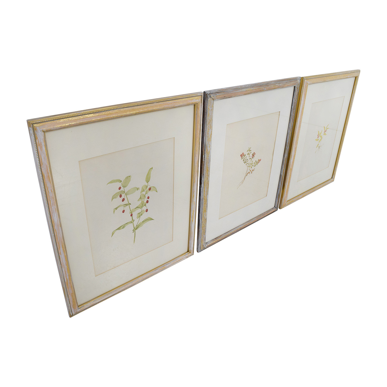 Three Antique Gold Framed Botanical Prints Nyc