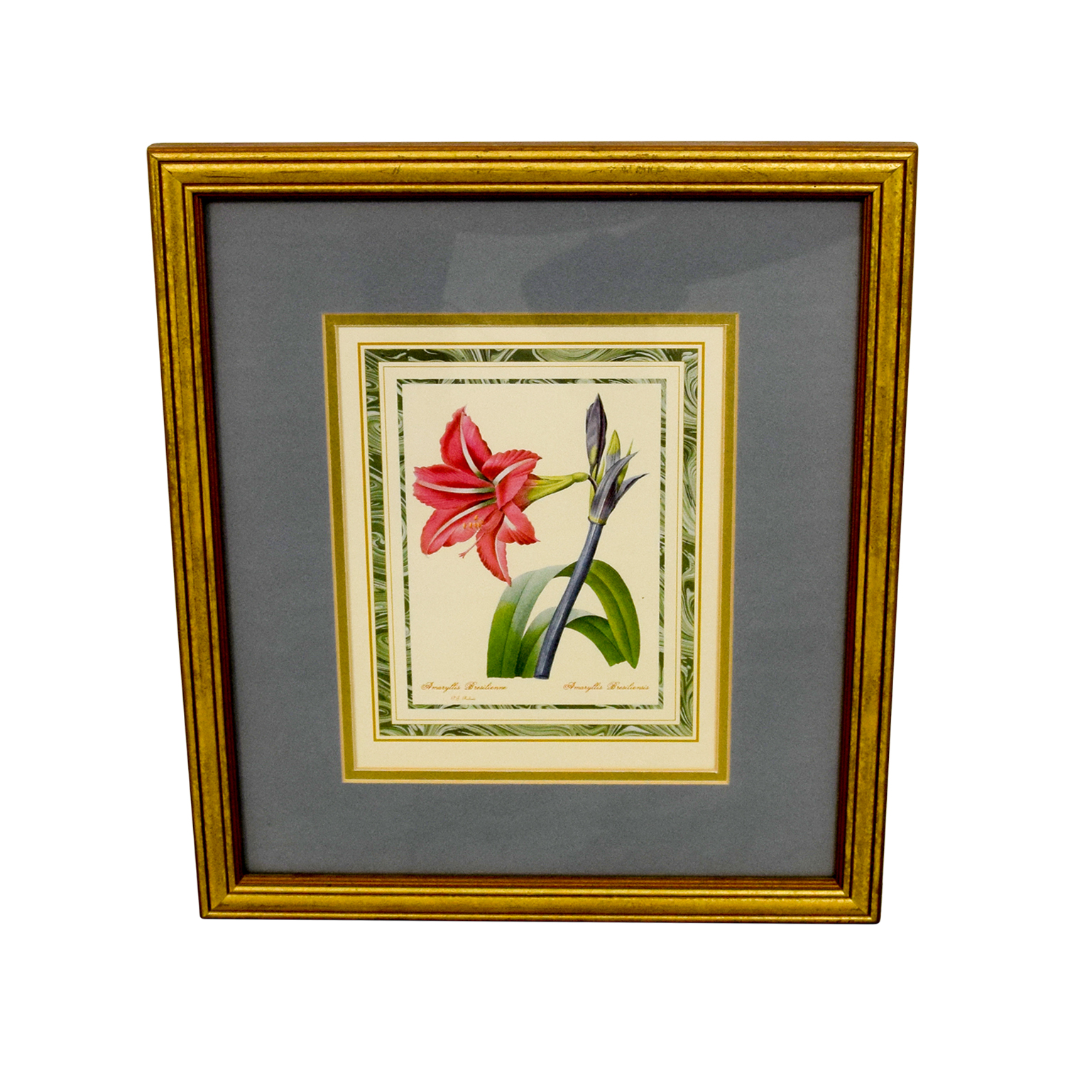 Scully & Scully Scully & Scully Gold Framed Botanical Print second hand