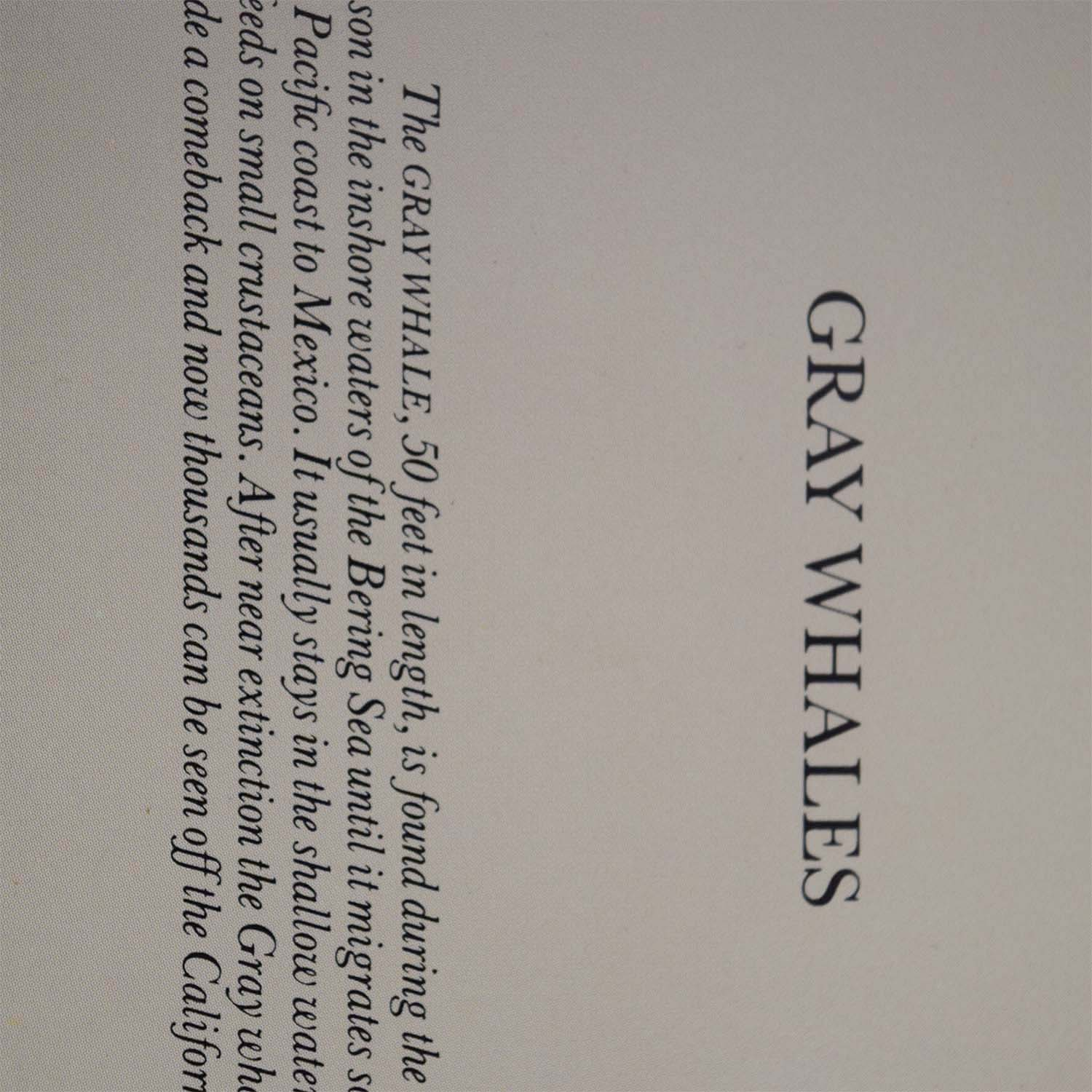 shop Portal Productions Gray Whales Lithograph Portal Productions, Ltd. Decor