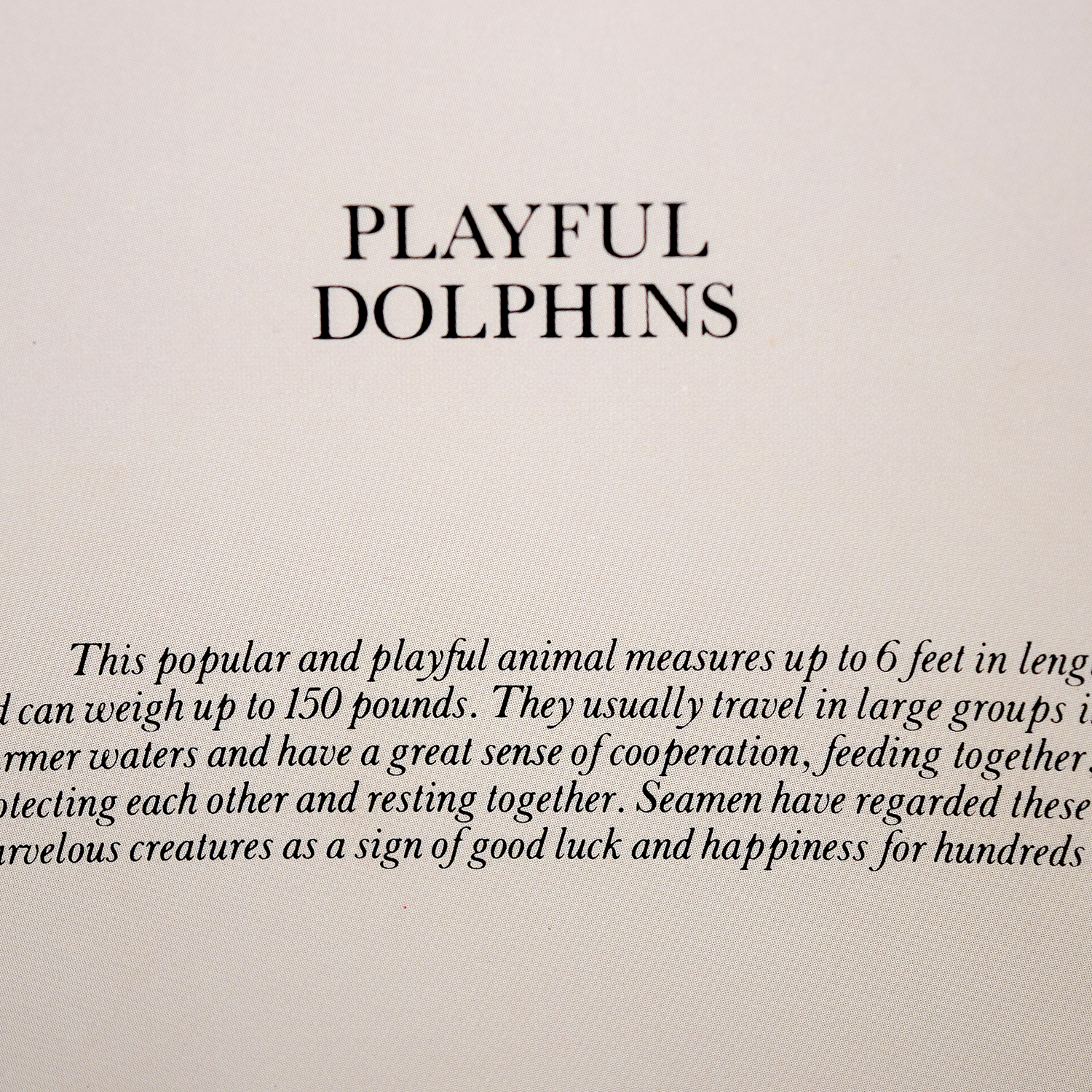 Portal Productions, Ltd. Portal Productions Playful Dolphins Lithograph second hand