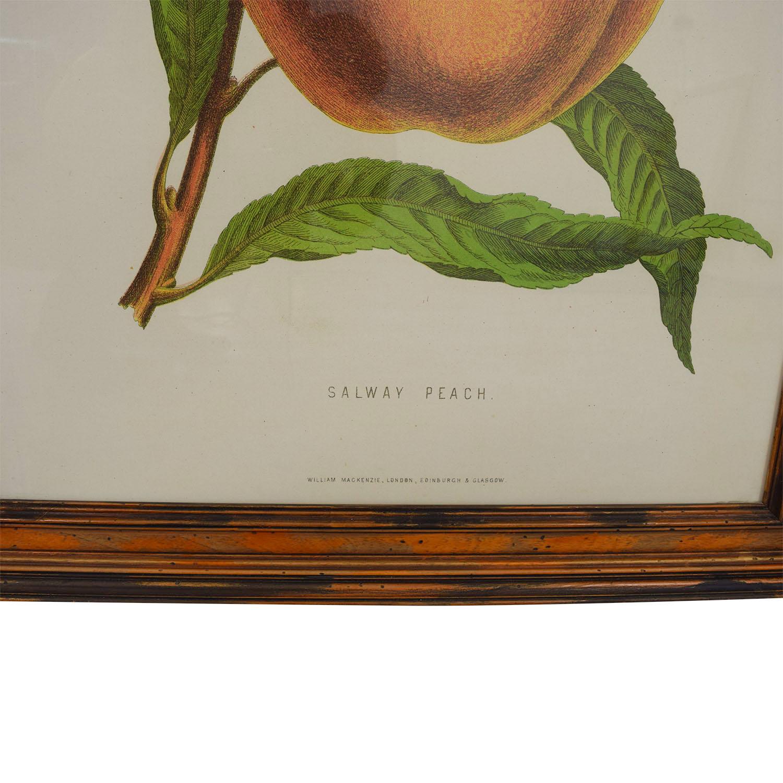 William Mackenzie Salway Peach Framed Print sale