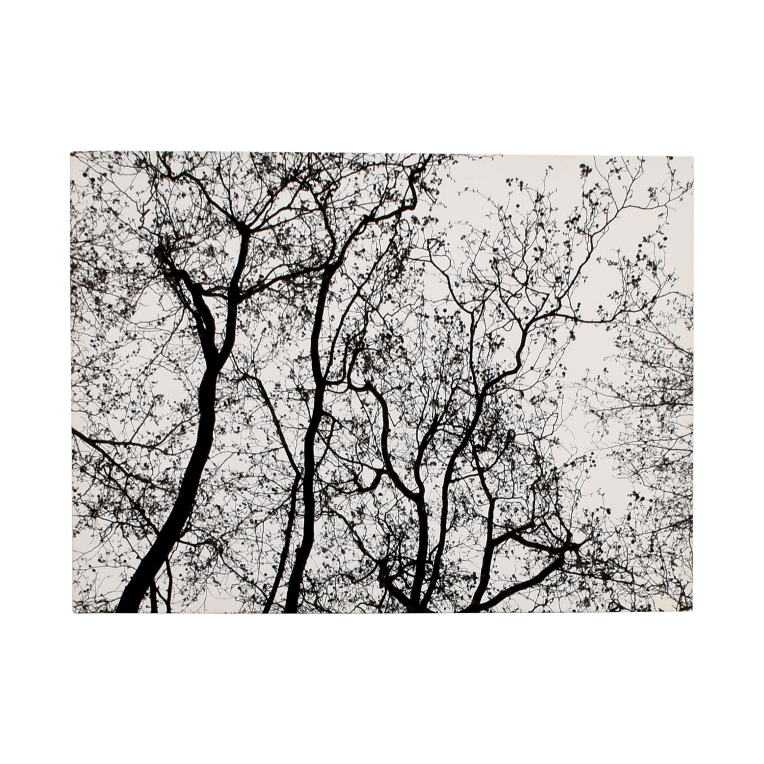 Modern Black and White Tree Branches Canvas White /Black