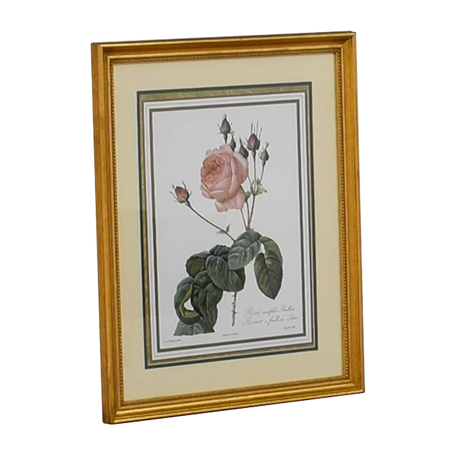 The Museum Collection The Museum Collection Rosier a Feuilles de Laitue Floral Print dimensions