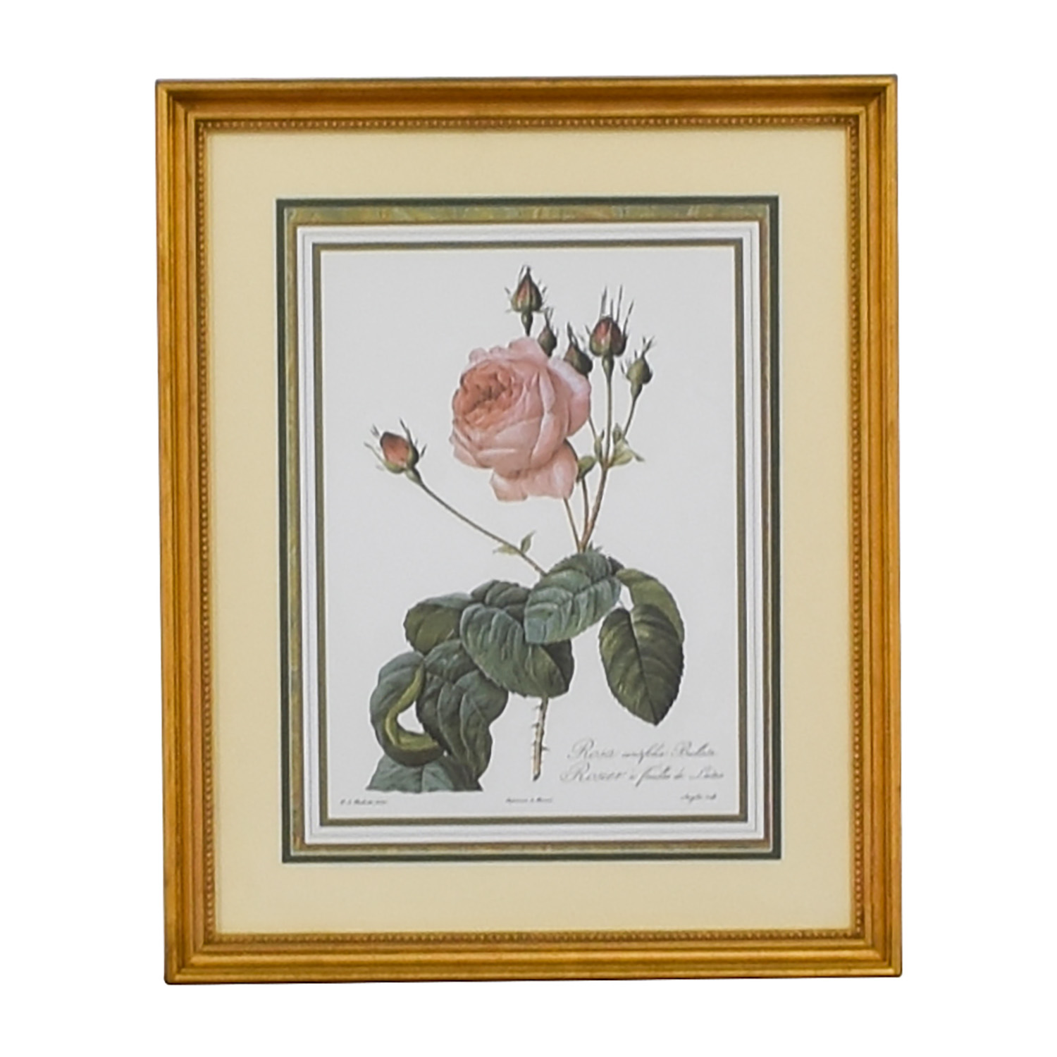 The Museum Collection The Museum Collection Rosier a Feuilles de Laitue Floral Print discount
