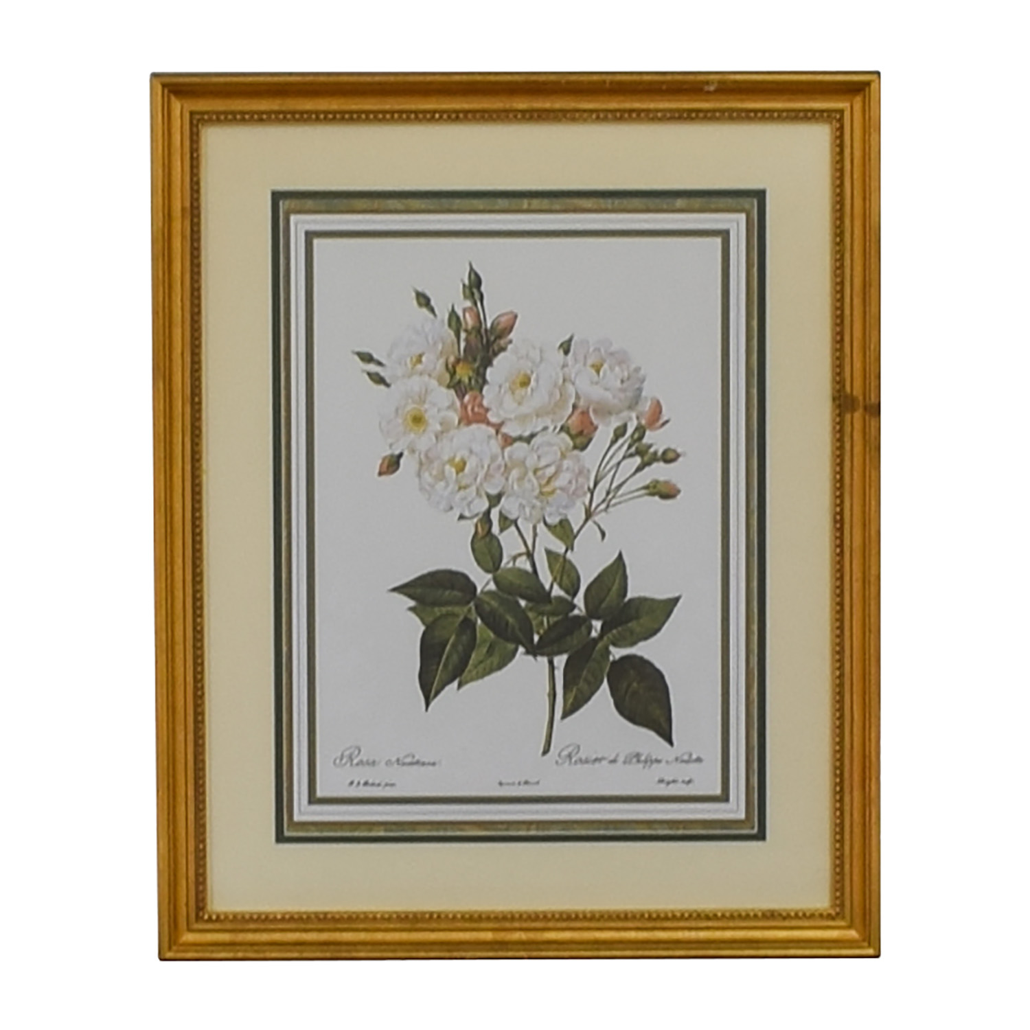 Chelsea Golden Chelsea Golden Rosa Noisettiana The Museum Collection Floral Prints nj