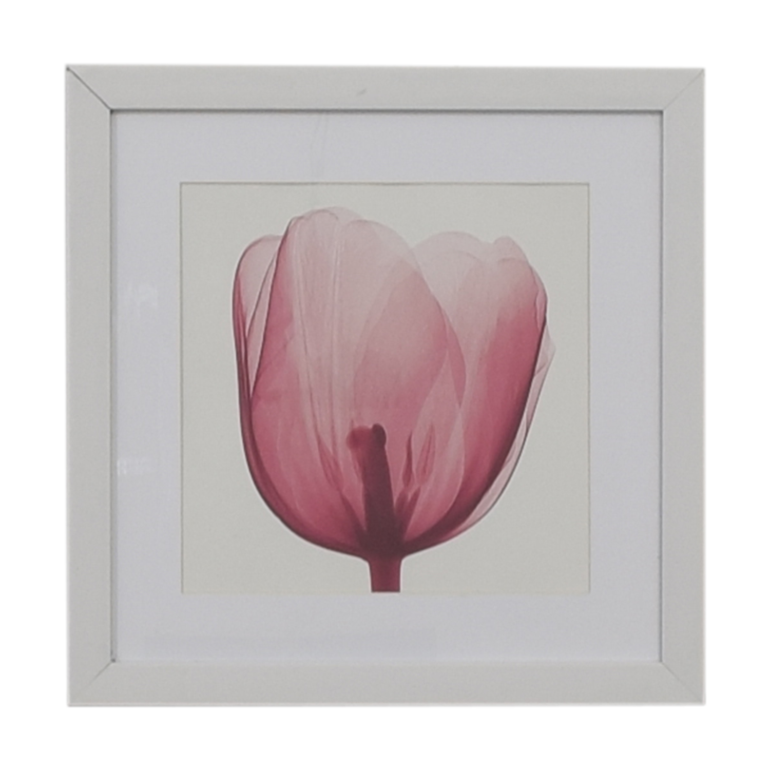 shop West Elm Pink Tulip Wall Art West Elm Wall Art