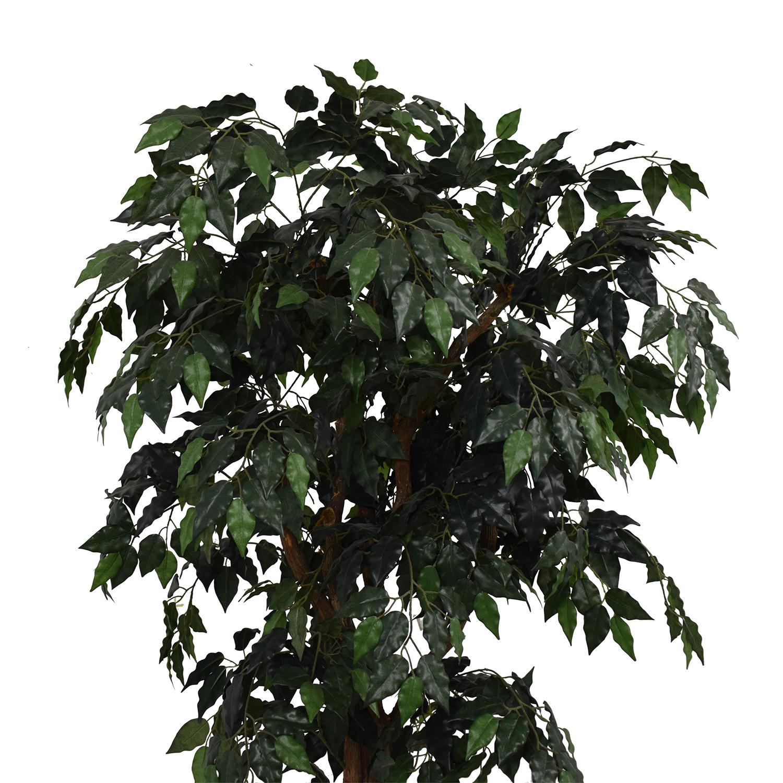 Ficus Tree in Cream Base dimensions